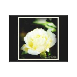 Rosa blanco imponente lienzo