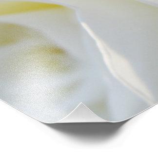 Rosa blanco arte con fotos