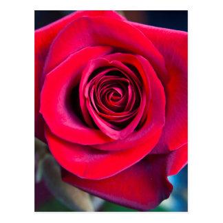 Rosa mágica postal