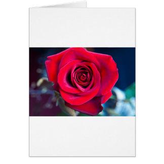 Rosa mágica tarjeta de felicitación