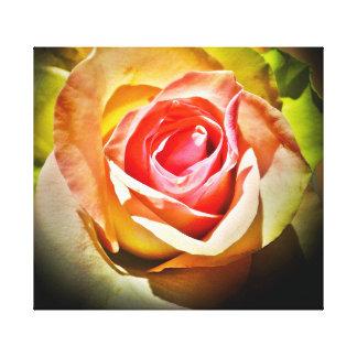 Rosa - Para Él Impresión En Lona Estirada