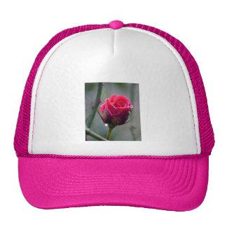 Rosa roja con gotita de agua, primer plano,