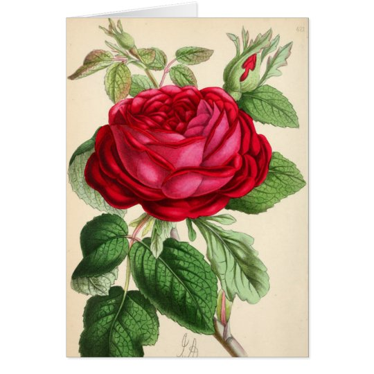 Rosa rojo magnífico tarjeta de felicitación