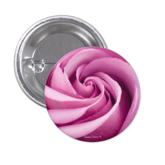 Rosa rosado doblado al botón de la perfección