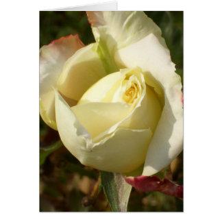 Rosas blancos románticos de CricketDiane del Tarjeta De Felicitación