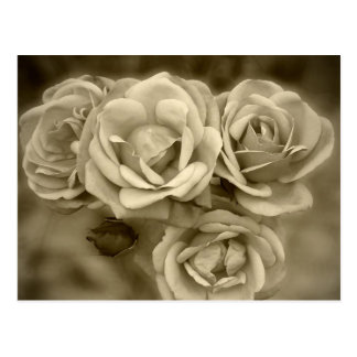 Rosas del vintage postal