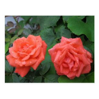 Rosas en la lluvia 7-19-2012 001.JPG Postal