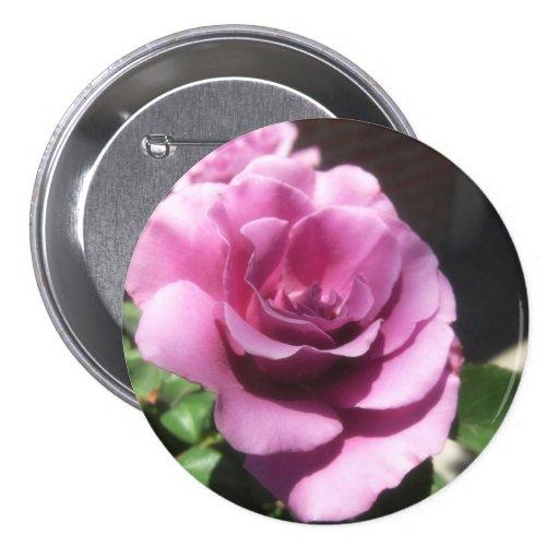 Rosas Moradas 1 Pins | Zazzle