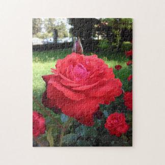 Rosas rojos magníficos puzzle