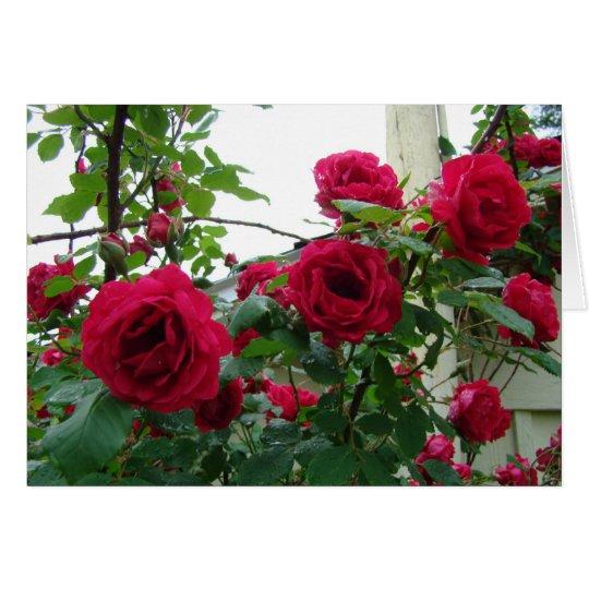 Rosas rojos que suben tarjeta de felicitación