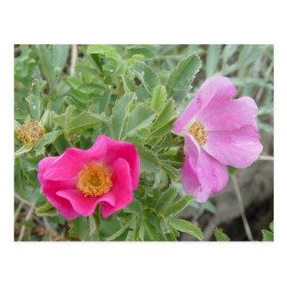 Rosas salvajes F0004 Postal