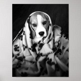 Rupert el poster del perro de perrito del beagle póster