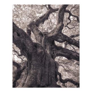 Sabiduría poderosa de la naturaleza del árbol de f