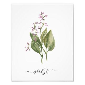 Sabio botánico de la impresión de la hierba de la foto