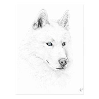 Sable ojos azules del husky siberiano de un arte postal