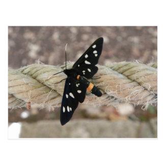 Sacerdote de las mariposas postal