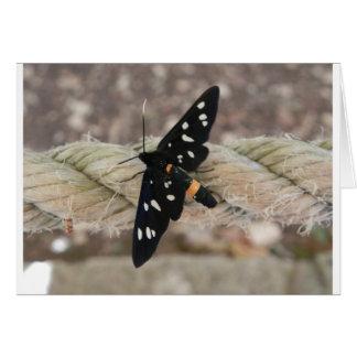 Sacerdote de las mariposas tarjeta de felicitación
