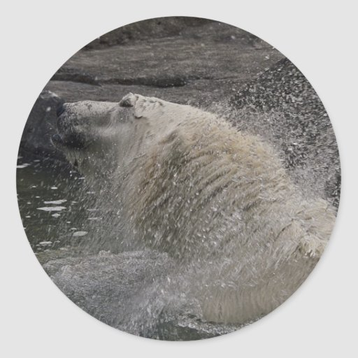 Sacudida del oso polar pegatina redonda
