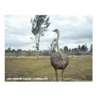 Safari 1977 de la avestruz del vintage postal