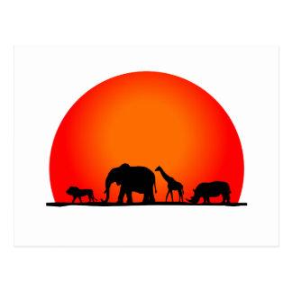 Safari Postal