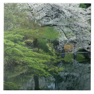 Sakura jardín del Koraku-en de Koishikawa Tokio Azulejo