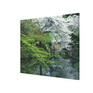 Sakura, jardín del Koraku-en de Koishikawa, Tokio, Impresión En Tela
