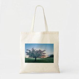 Salida del sol de la primavera, árbol florecido en bolso de tela