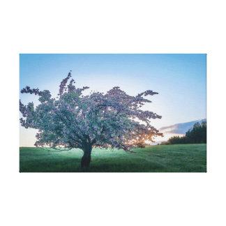Salida del sol de la primavera, árbol florecido en lienzo