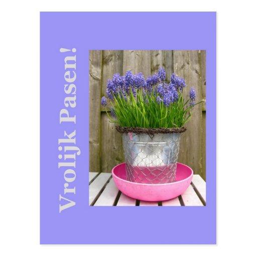 Saludo azul común de pascua de los hyacints - hola tarjeta postal