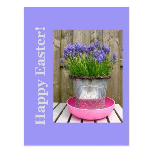Saludo azul común de pascua de los hyacints postal