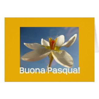 Saludo blanco de pascua del azafrán - italiano tarjeta de felicitación