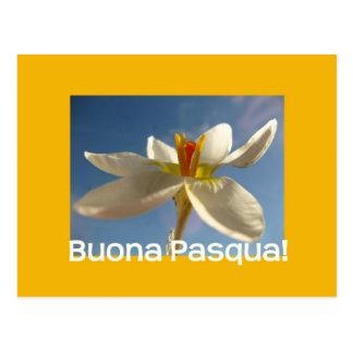 Saludo blanco de pascua del azafrán - italiano postal