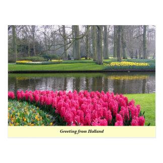 Saludo de Holanda Tarjeta Postal