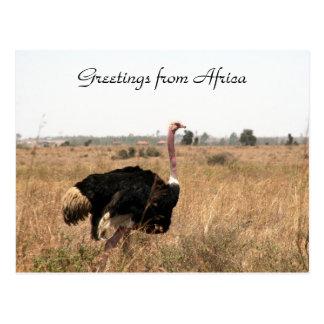 saludos de la avestruz postal
