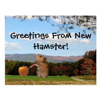 ¡Saludos del nuevo hámster!  Postal