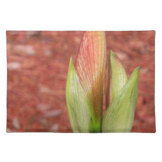 Salvamanteles 102al Amaryllis Apple florece brote