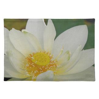 Salvamanteles Agua poner crema Lily02.JPG