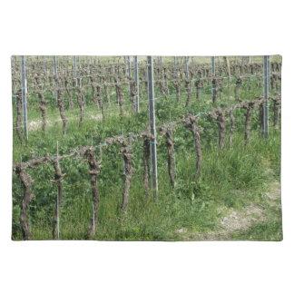 Salvamanteles Campo desnudo del viñedo en invierno. Toscana,