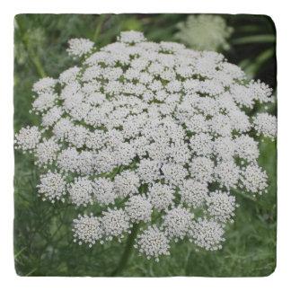 Salvamanteles Cordón de la reina Anne blanco de la flor salvaje