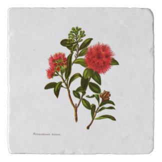 Salvamanteles Flores de la ciencia NZ del vintage -