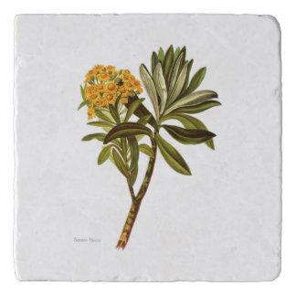 Salvamanteles Flores de la ciencia NZ del vintage - huntii del