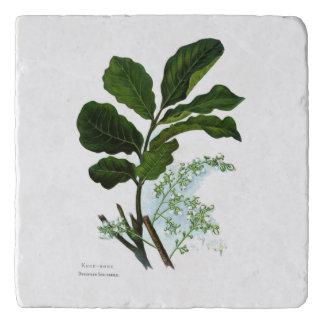 Salvamanteles Flores de la ciencia NZ del vintage - Kohe Kohe