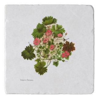 Salvamanteles Flores de la ciencia NZ del vintage - traversii
