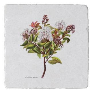 Salvamanteles Flores del vintage NZ - albiflora de Meterosideros