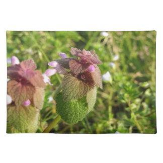 Salvamanteles Muerto-ortiga púrpura (purpureum del Lamium) en