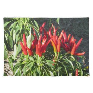 Salvamanteles Pimientas rojas que cuelgan en la planta. Toscana,