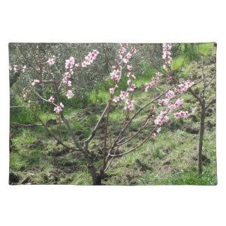 Salvamanteles Solo árbol de melocotón en flor. Toscana, Italia