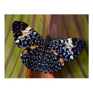 Sammamish, Washington. Mariposas tropicales 54 Postal