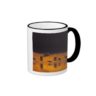 Sandhill Cranes el canadensis) del Grus Bosque Del Taza De Café