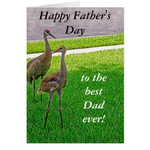 Sandhill Cranes - el día de padre - cumpleaños Tarjetón